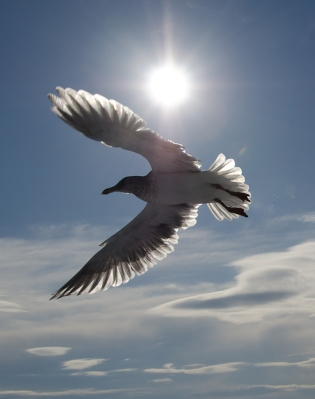 seagull-in-the-sun2.jpg