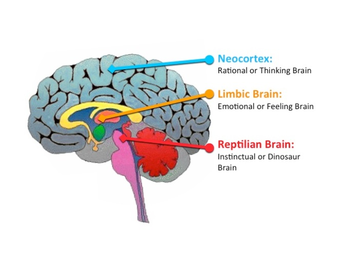 reptillian-brain.jpg