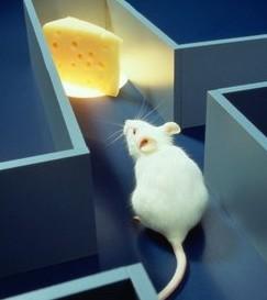 cheese-maze.jpg